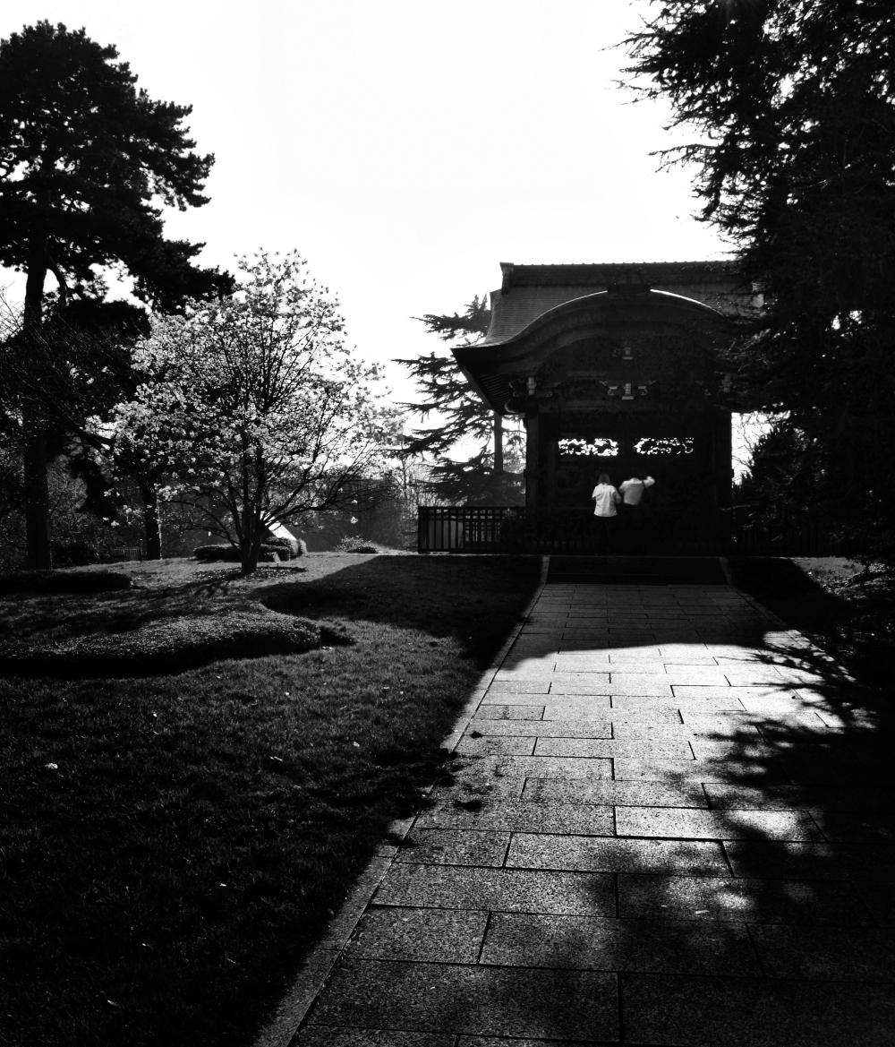 kew-gardens england garden tree blossom japan