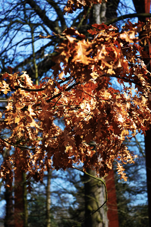 kew-gardens england tree leaf