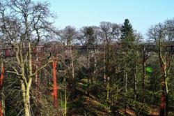kew-gardens england tree xstrata
