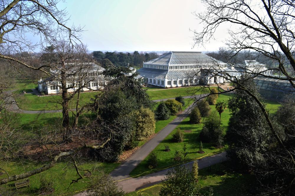 kew-gardens england xstrata tree greenhouse
