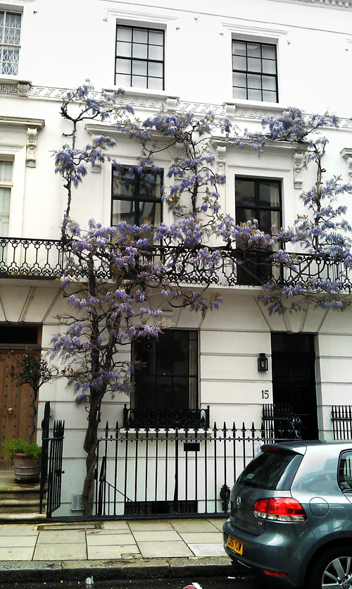london england street house wisteria fuji