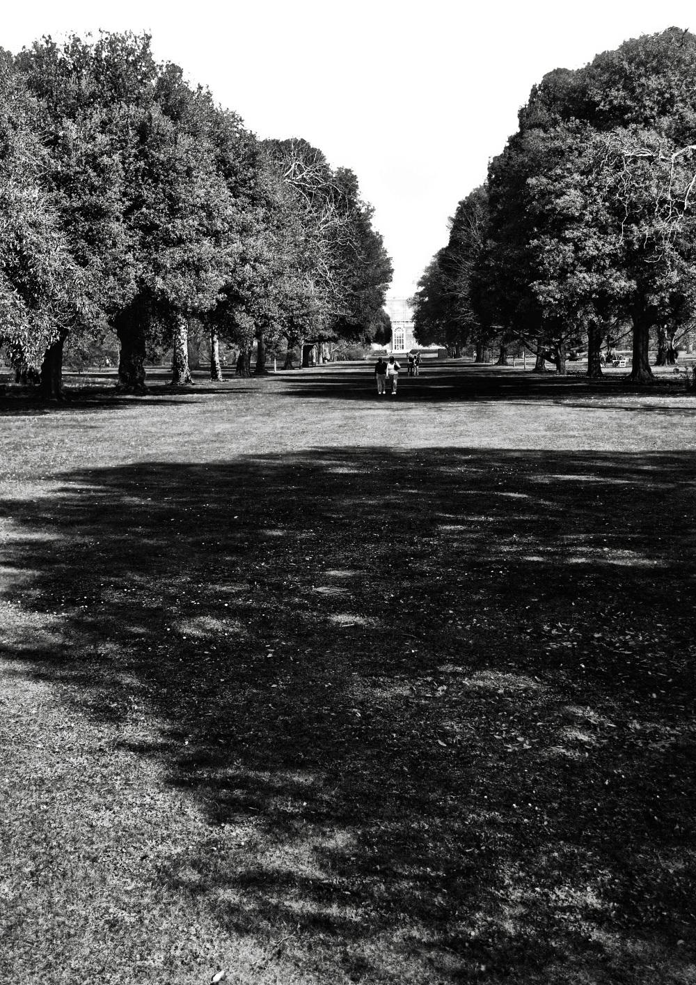 kew-gardens england tree park