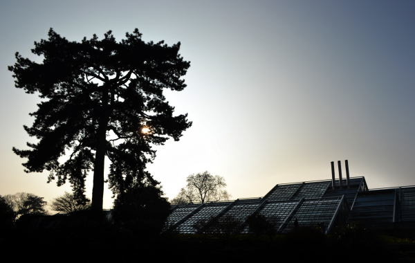 kew-gardens england tree greenhouse garden