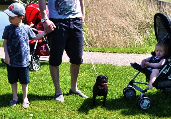 foxton-locks leicester england pug dog children