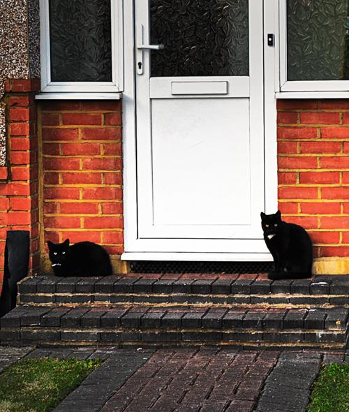 worcester-park england cat