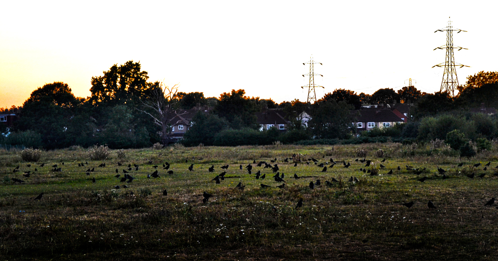 worcester-park england sunset crow bird