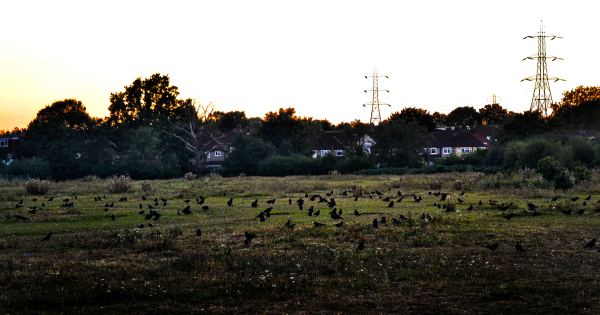 worcester-park england sunset crow bird
