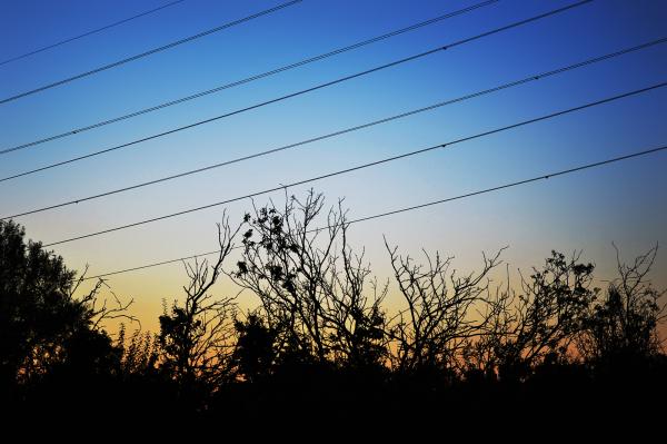 worcester-park england sunset tree