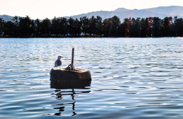 japan kyoto amanohashidate sea seagull bird