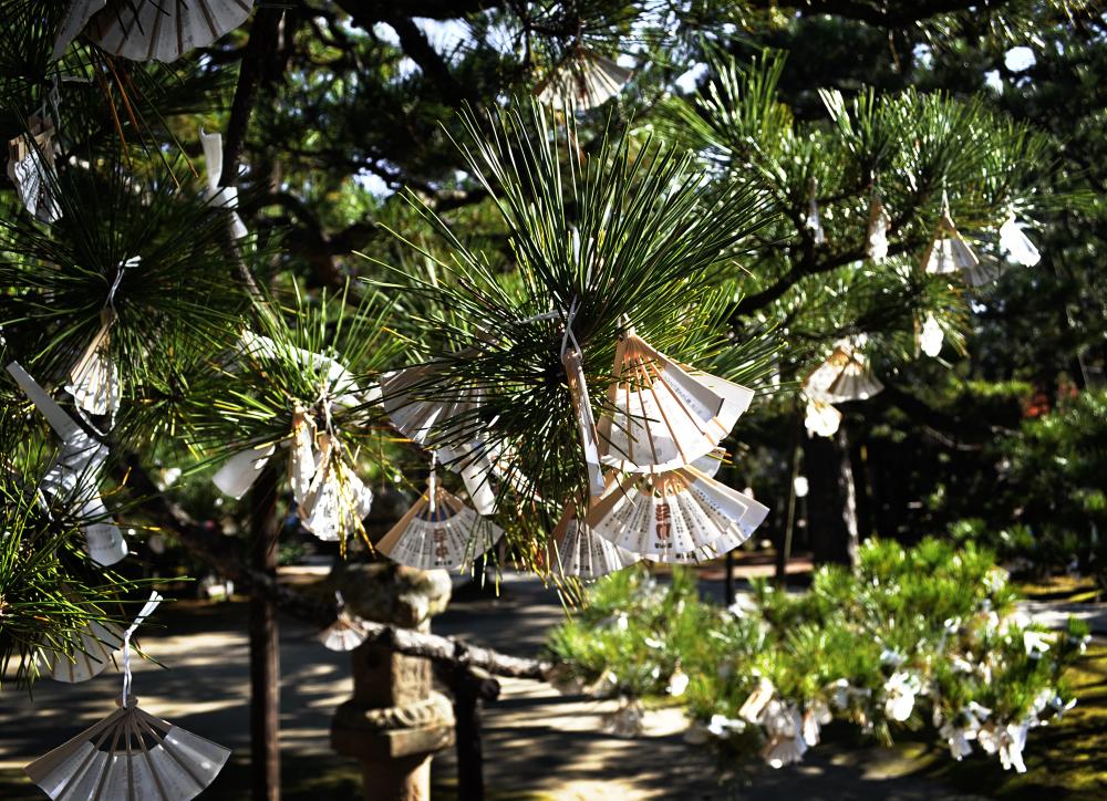japan kyoto amanohashidate shrine tree pine ema