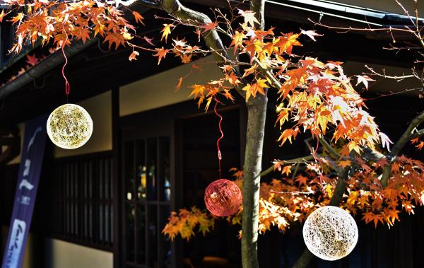 Momiji, Amanohashidate 3
