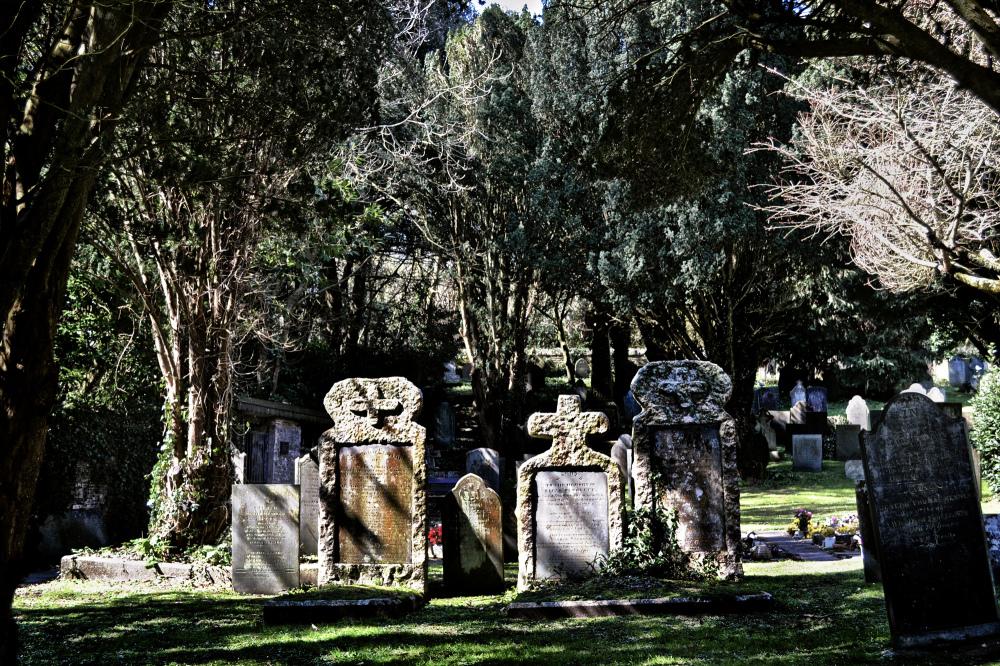 padstow cornwall england tree churchyard