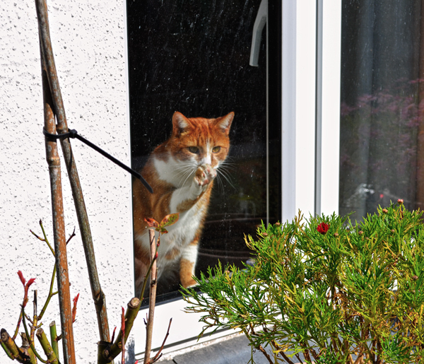 padstow cornwall england cat