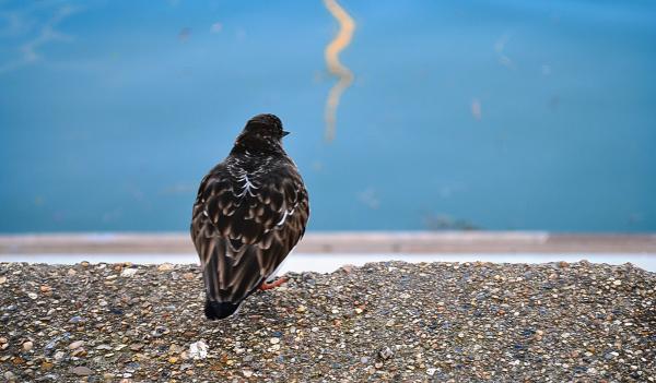 padstow cornwall england bird
