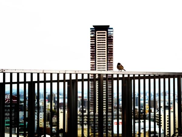 osaka umeda japan station bird sparrow