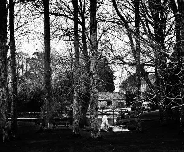 chard somerset hornsbury-mill england tree