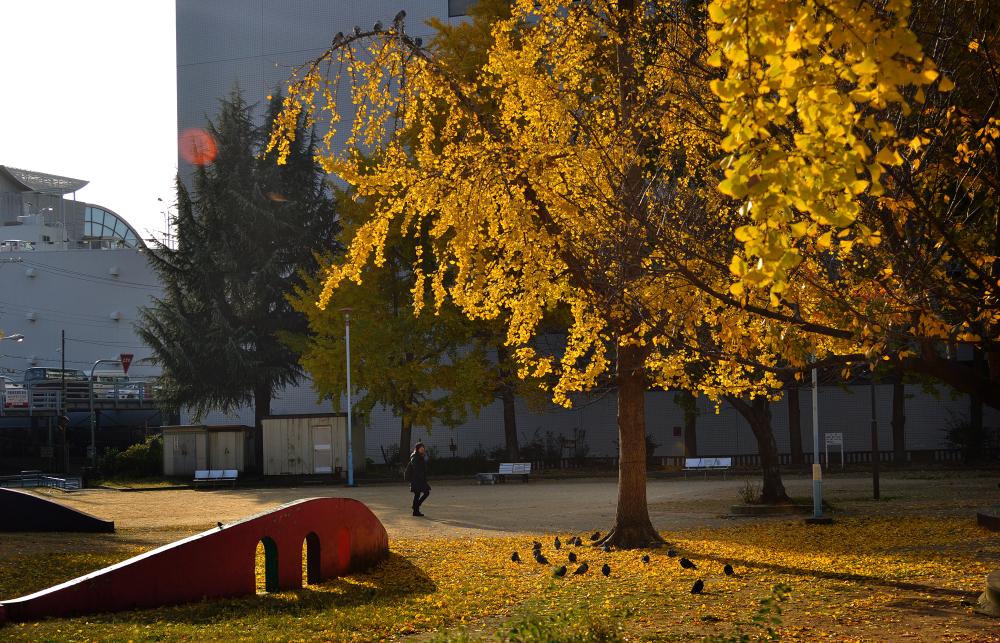 osaka minami-morimachi japan park tree
