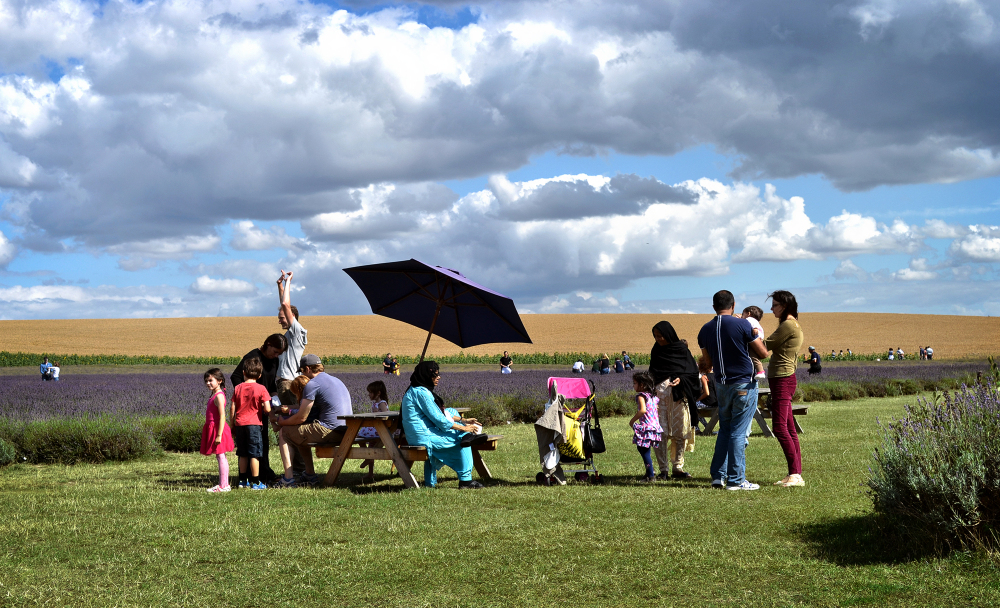 hitchin-lavender farm field england family