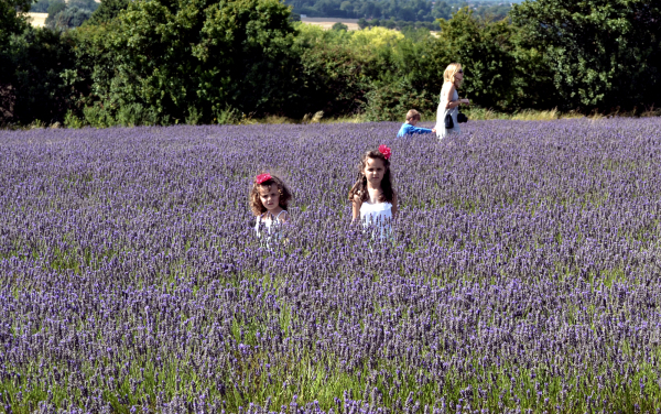 Hitchin Lavender Farm, Hertfordshire 7