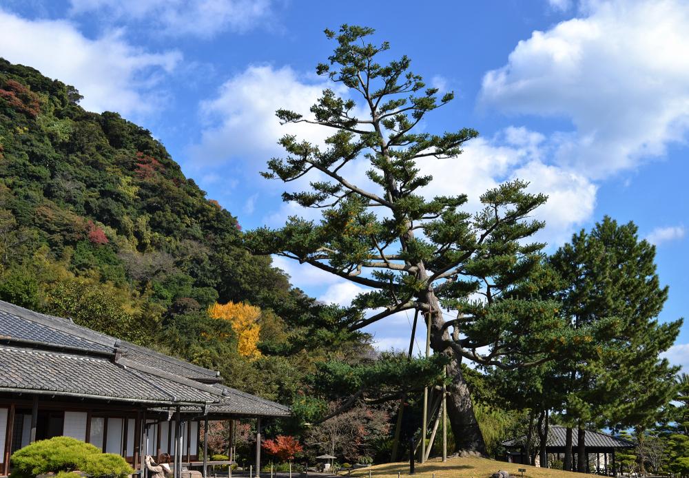 kagoshima kyushu japan sengan-en garden tree