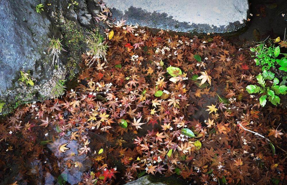 kagoshima kyushu japan sengan-en garden leaf