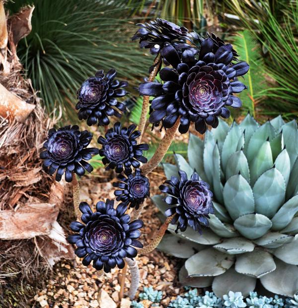 england wisley garden plant