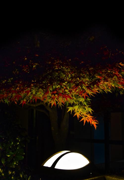 okayama senoo momiji maple leaf japan