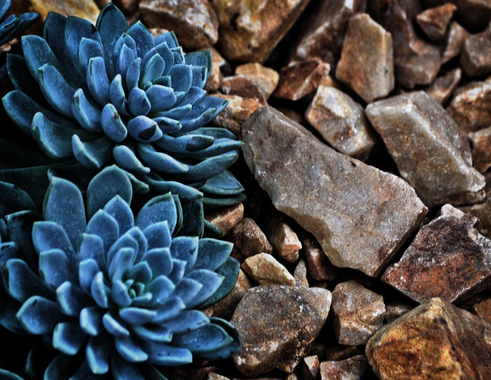 wisley garden england plant cactus
