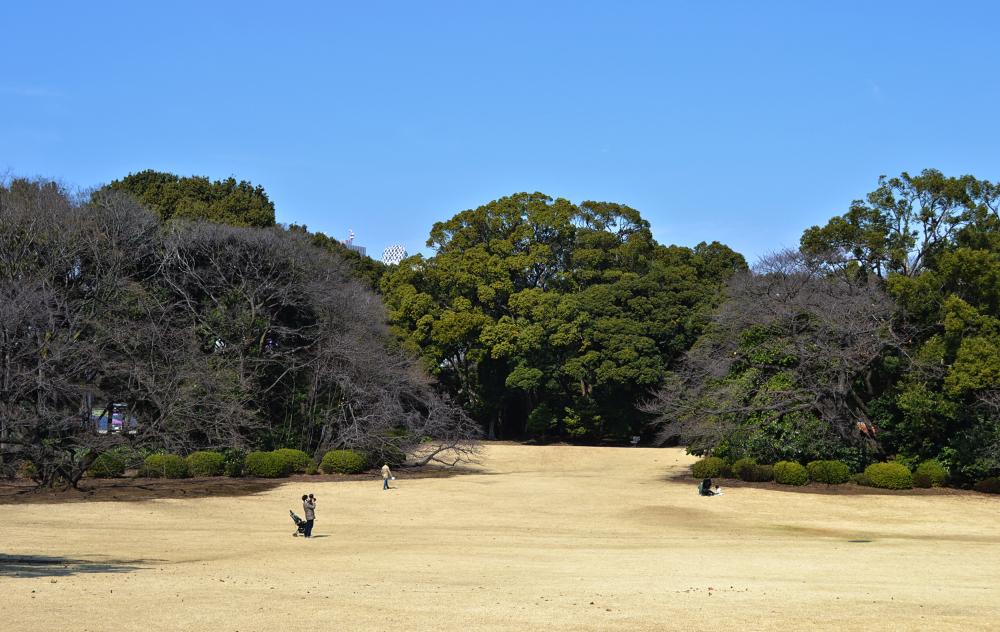 park tokyo shinjuku shinjuku-park japan tree