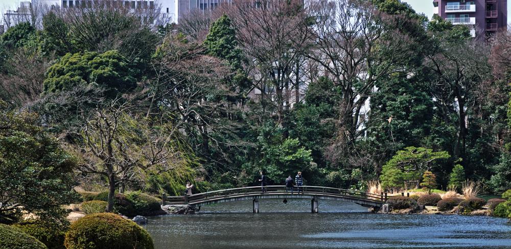 park tokyo shinjuku shinjuku-park japan pond
