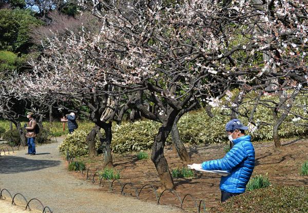 park tokyo shinjuku shinjuku-park japan ume