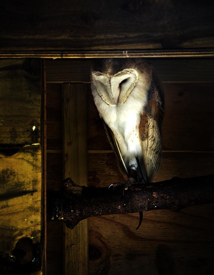 hobbledown-farm zoo england epsom owl bird