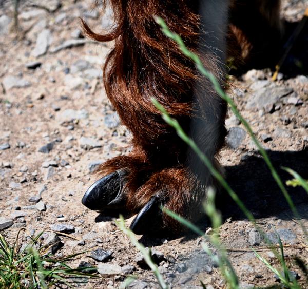 hobbledown-farm zoo england epsom alpaca