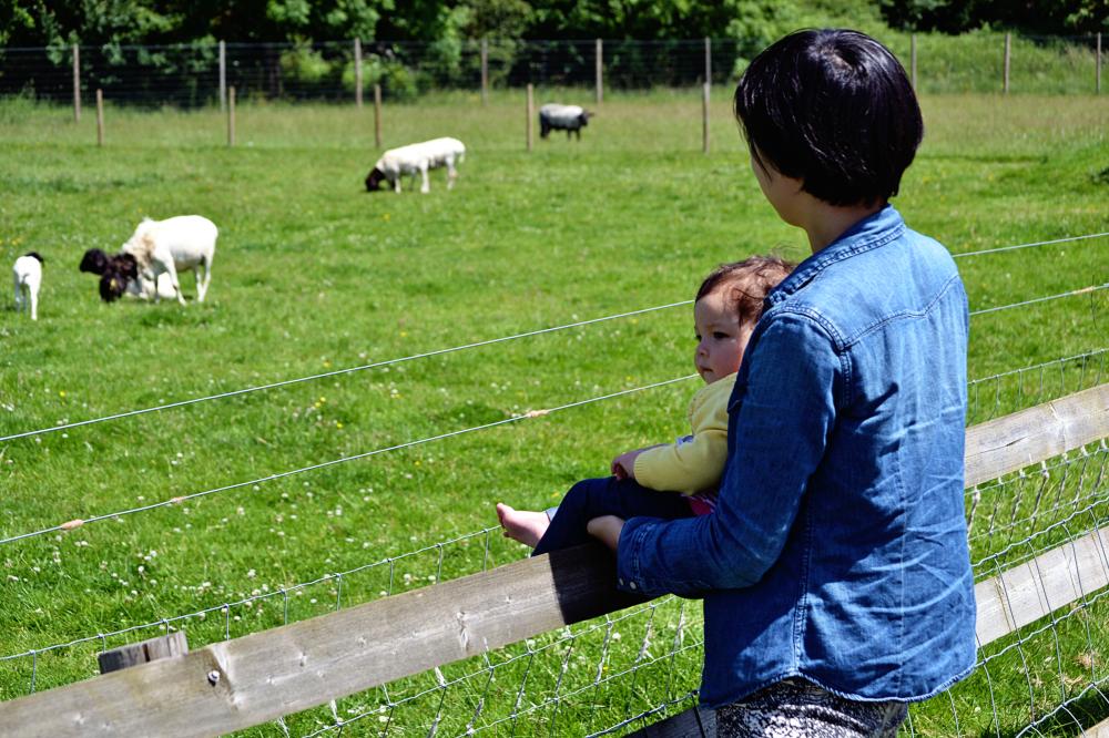 hobbledown-farm zoo england epsom mia mayumi