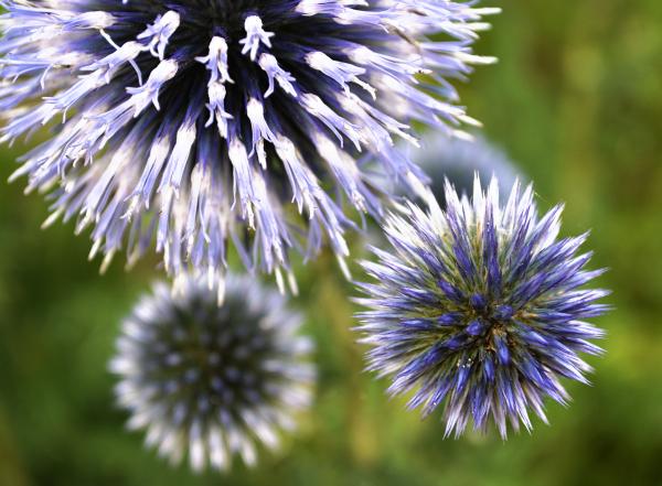 abbey-park park leicester flower england