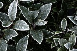Winter Days 14