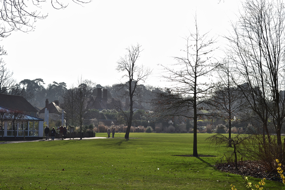 wisley garden england tree lawn
