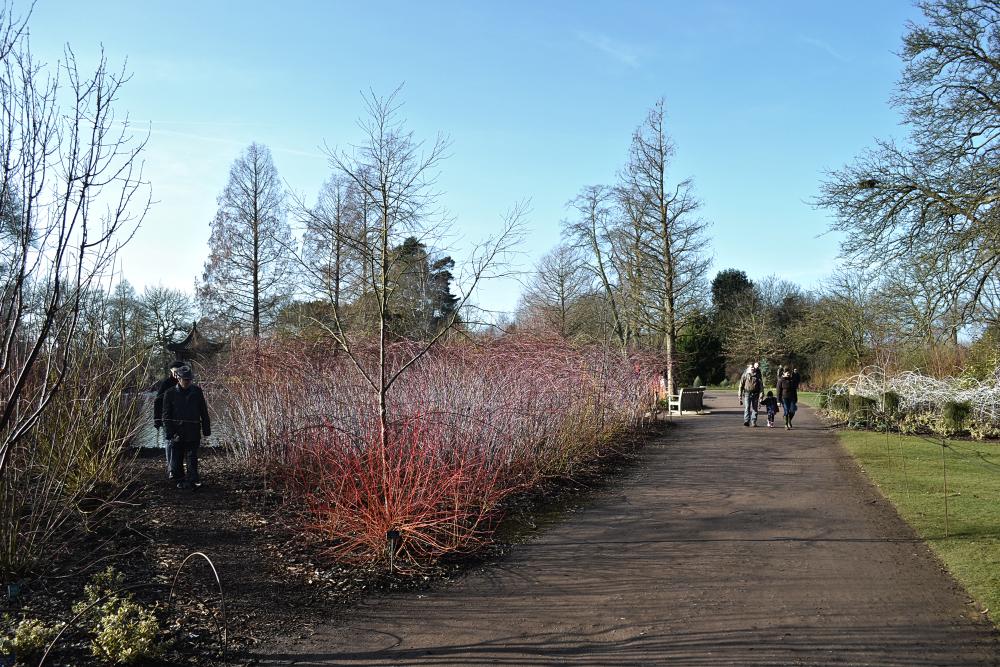 wisley garden england tree annys-winter-orange