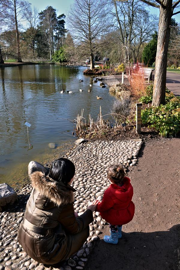 wisley garden england mia mayumi pond