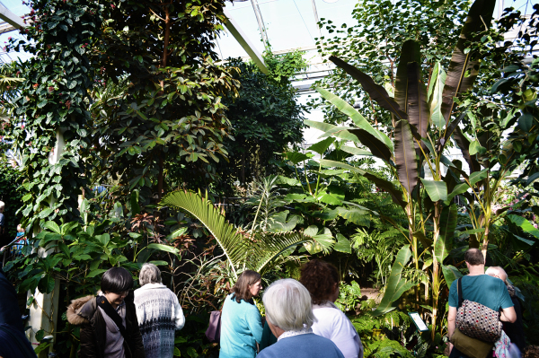 Inside the Glasshouse, Wisley 3