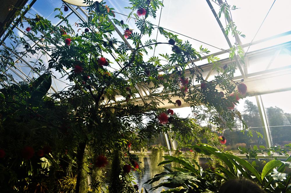 wisley england greenhouse tree