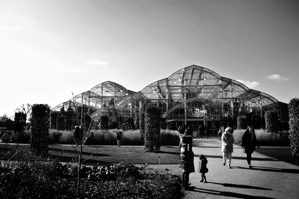 Morning at the Glasshouse, Wisley 2