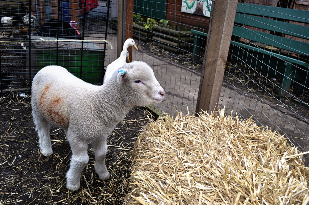 vauxhall london england farm vauxhall-city-farm
