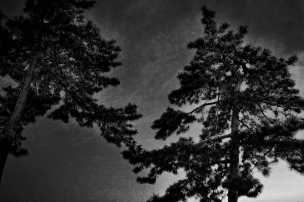tamaño okayama japan beach pine tree