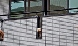 okayama japan apartment dog
