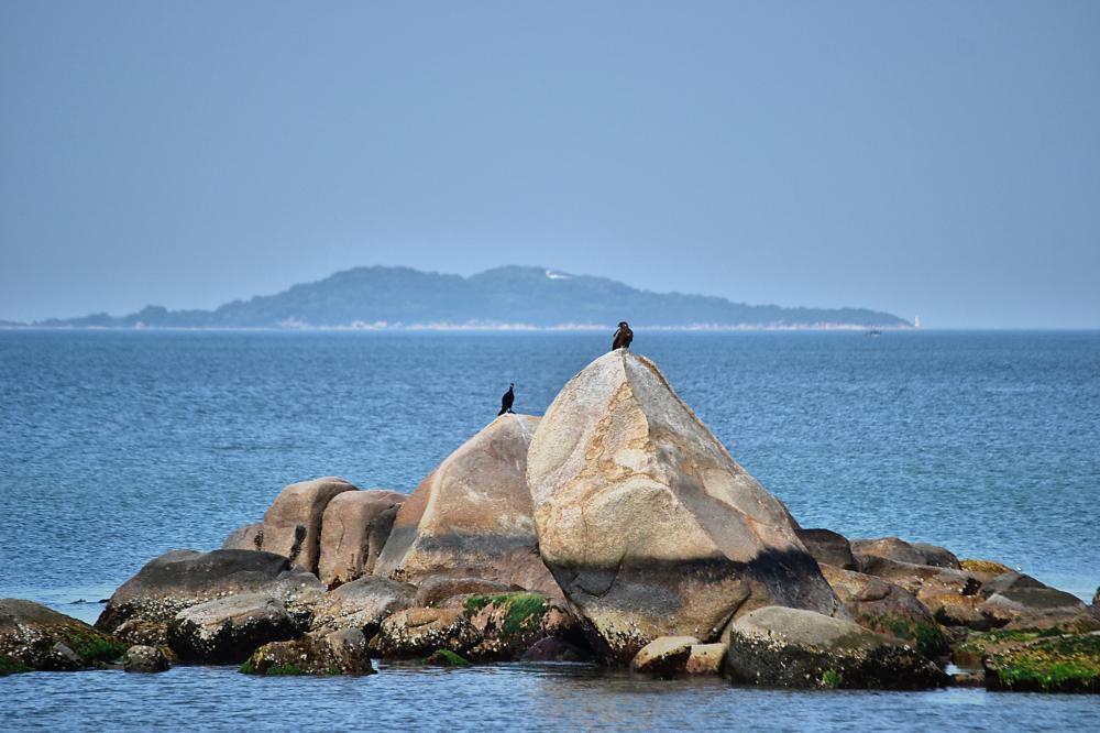japan kagawa inujima seirensho cormorant hawk bird