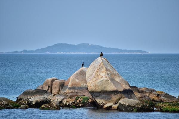 Inujima Seirensho Art Museum 21: Hawk vs Cormorant
