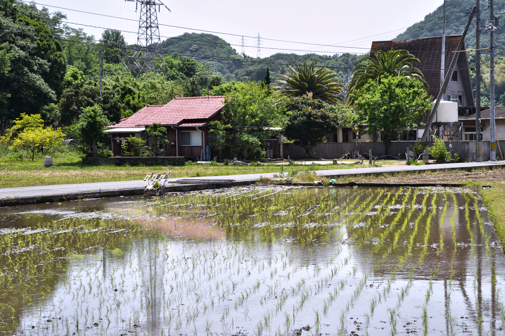 japan kagawa teshima rice paddy house