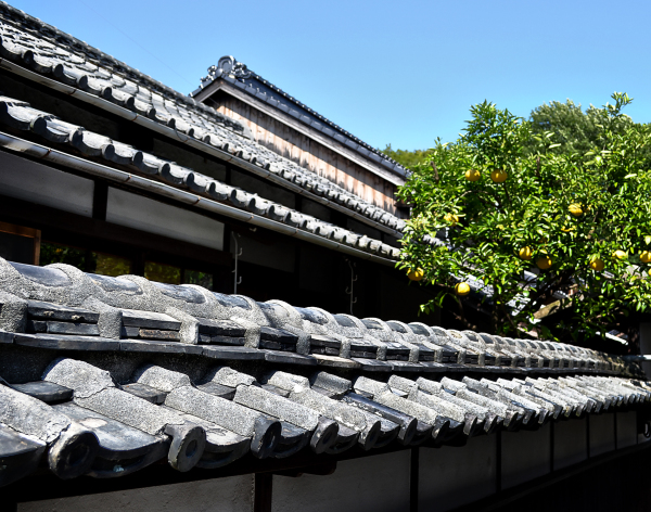 japan kagawa naoshima house roof mikan