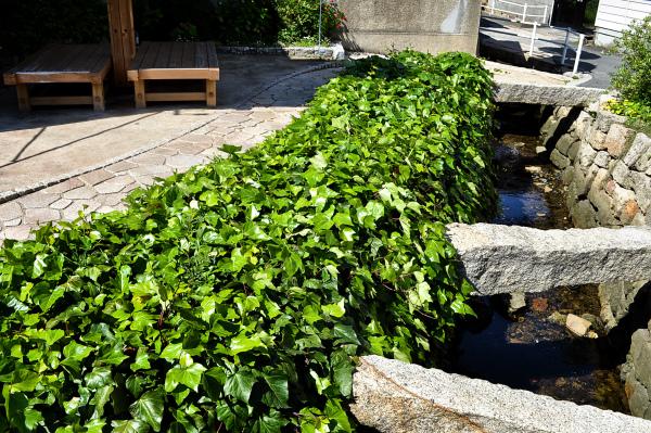 japan kagawa naoshima house stream ivy